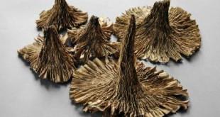 """Jūratės Petruškevičienės mini tekstilės paroda """"Rinkoto herbariumas"""""""
